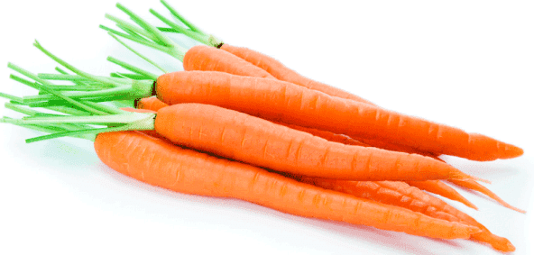 морковь для кур
