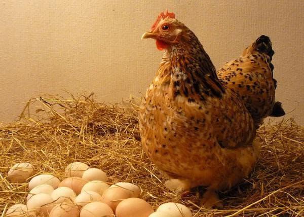 другая кладка яиц