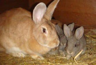 кролики с крольчихай