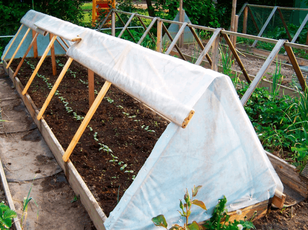 высаживание огурцов в «теплые» гряды