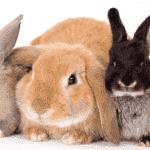 Симптомы болезней кроликов и их лечение