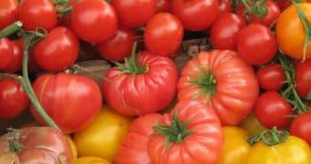 помидоры разных сортов