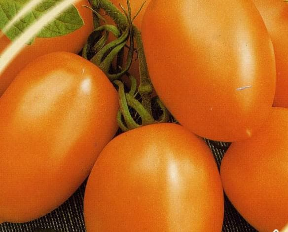 Ранние сорта томатов для теплицы самоопыляемые