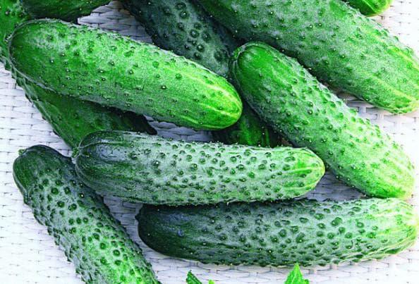 зелёные огурцы на грядке
