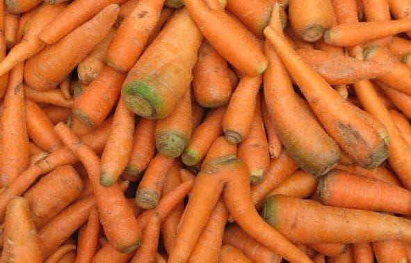 кормовая морковь
