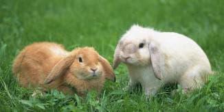болезни кроликов на ушах