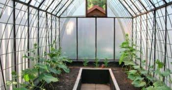 Выращивание огурцов в теплице из поликарбоната, посадка
