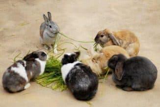 чем они болеют (кролики)