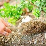 Как приготовить перегной на огороде, даче по ускоренной технологии