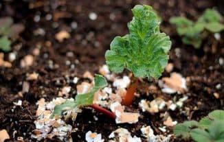 Яичная скорлупа как удобрение