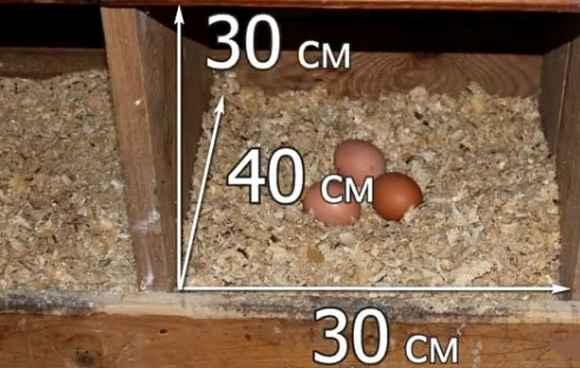 размер гнезда для кур несушек