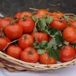 Какие низкорослые сорта томатов подходят для открытого грунта?