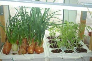 зелень для дома