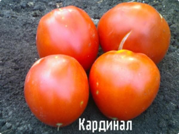 помидор Кардинал