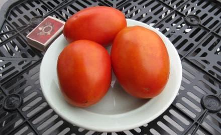 помидор Гусиное яйцо