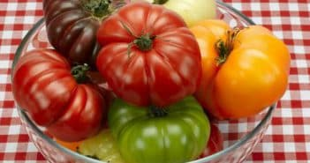 разные помидоры
