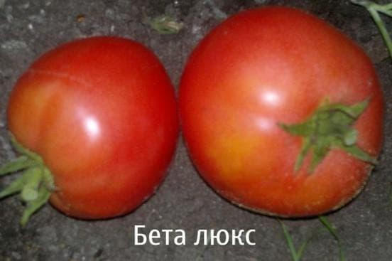 помидоры Беталюкс