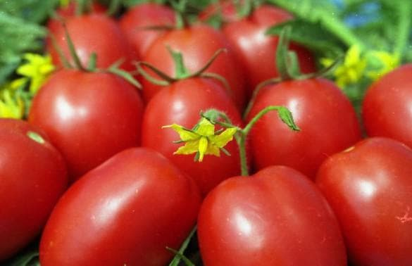 помидор Де-барао