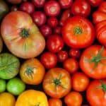 Способы выращивания рассады томатов в домашних условиях