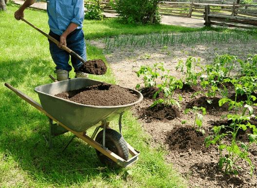 удобрение на огороде