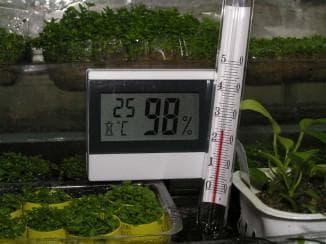 влажность в теплице для растений