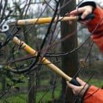Когда и как правильно обрезать фруктовые деревья?
