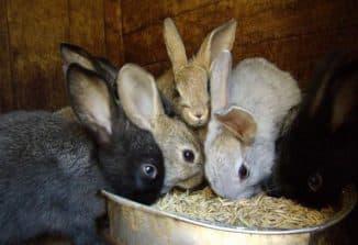 кролики и корм