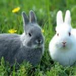 Как приготовить комбикорм для кроликов: состав и рецепты