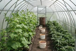 расположение овощей в теплице