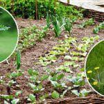 как пользоваться ураганом от сорняков