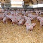 состав комбикорма для свиней