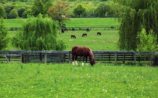 пастбища для лошадей