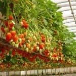 какие овощи можно сажать после клубники