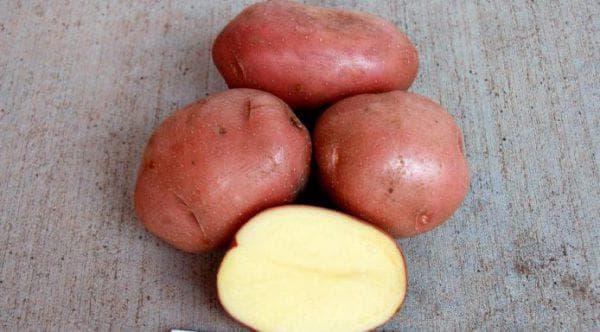 Сорт картофеля Беллароза: характеристика, фото, отзывы