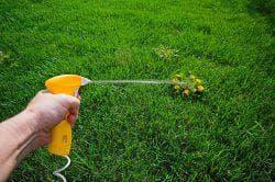 гербициды от сорняков