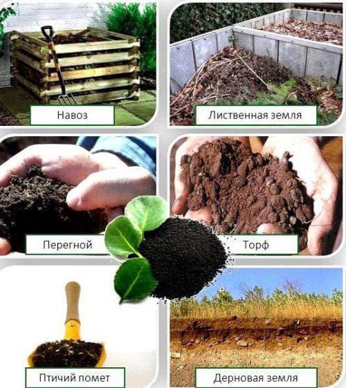 органические составы для подкормки