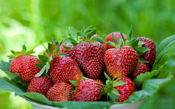 Виктория ягода