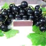 Список сортов черной смородины, устойчивых к почковому клещу