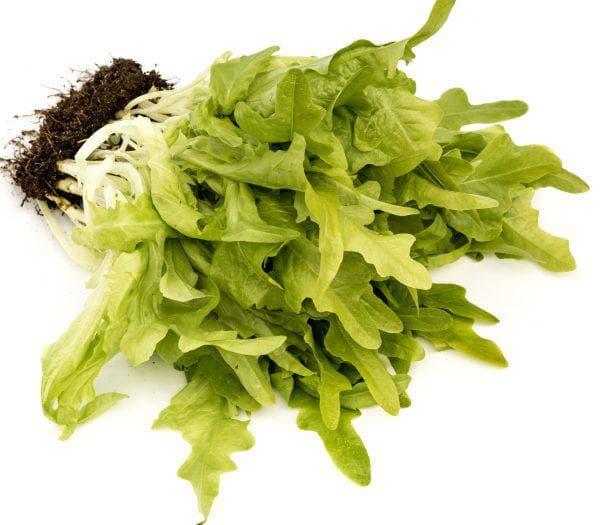 листовой салат Дубачек