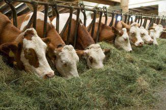 корма для коров