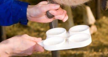 мастит у козы лечение антибиотиками