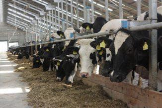 надои коров