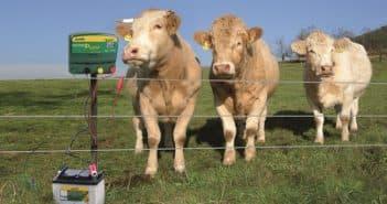 сколько стоит электропастух цена для коров