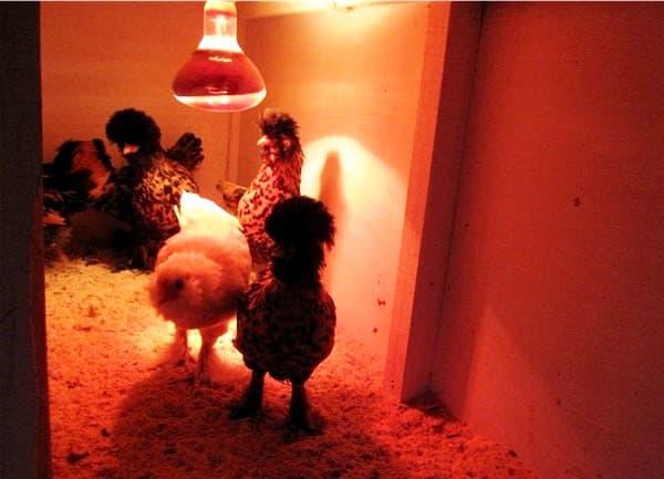 освещение курятника зимой