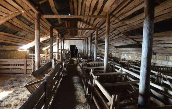 помещение для породы овец тексель