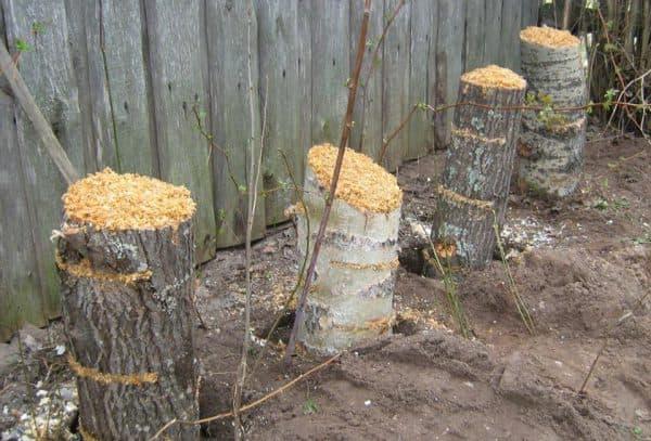 грибы в огороде